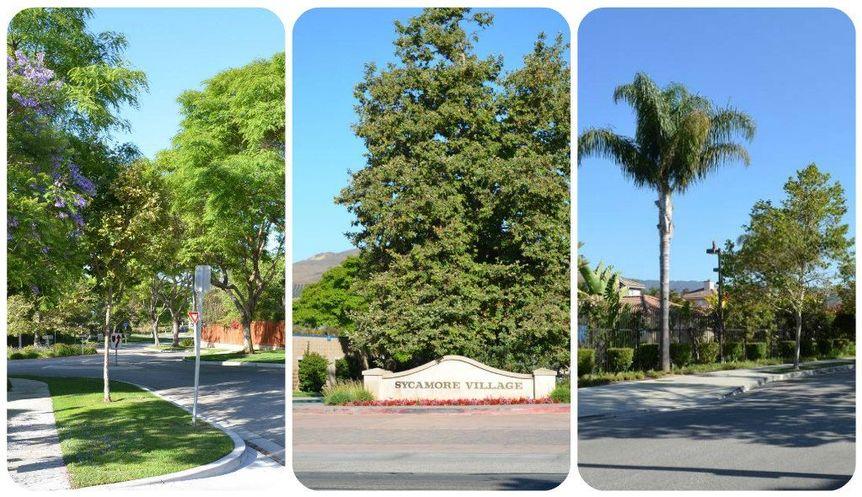 Ventura Sycamore Village Collage