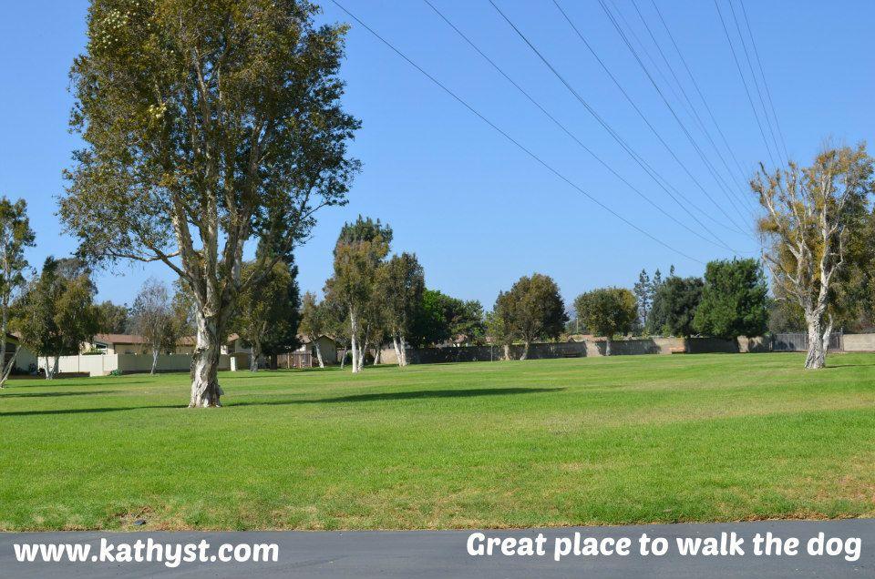Rancho Ventura Senior Community Dog Area