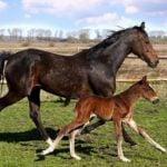 Ventura County Horse Properties