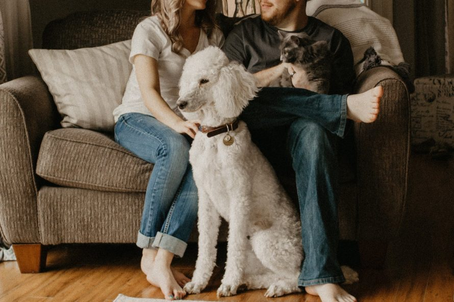 ensuring your new home is pet friendly image