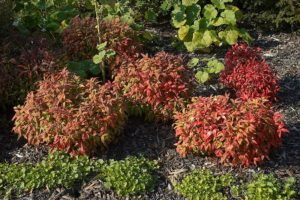 red and green plants
