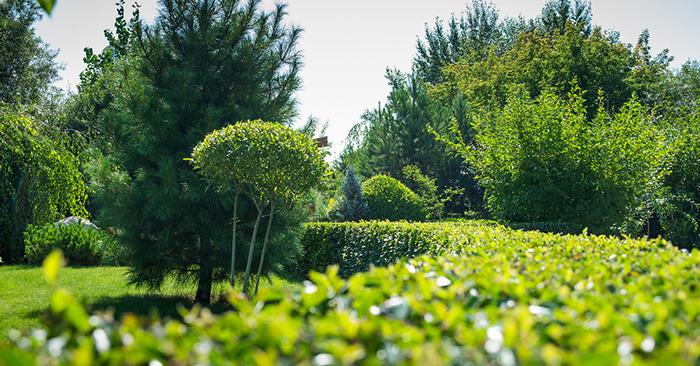 landscaping, 2020 trends, realtor tom gilliam
