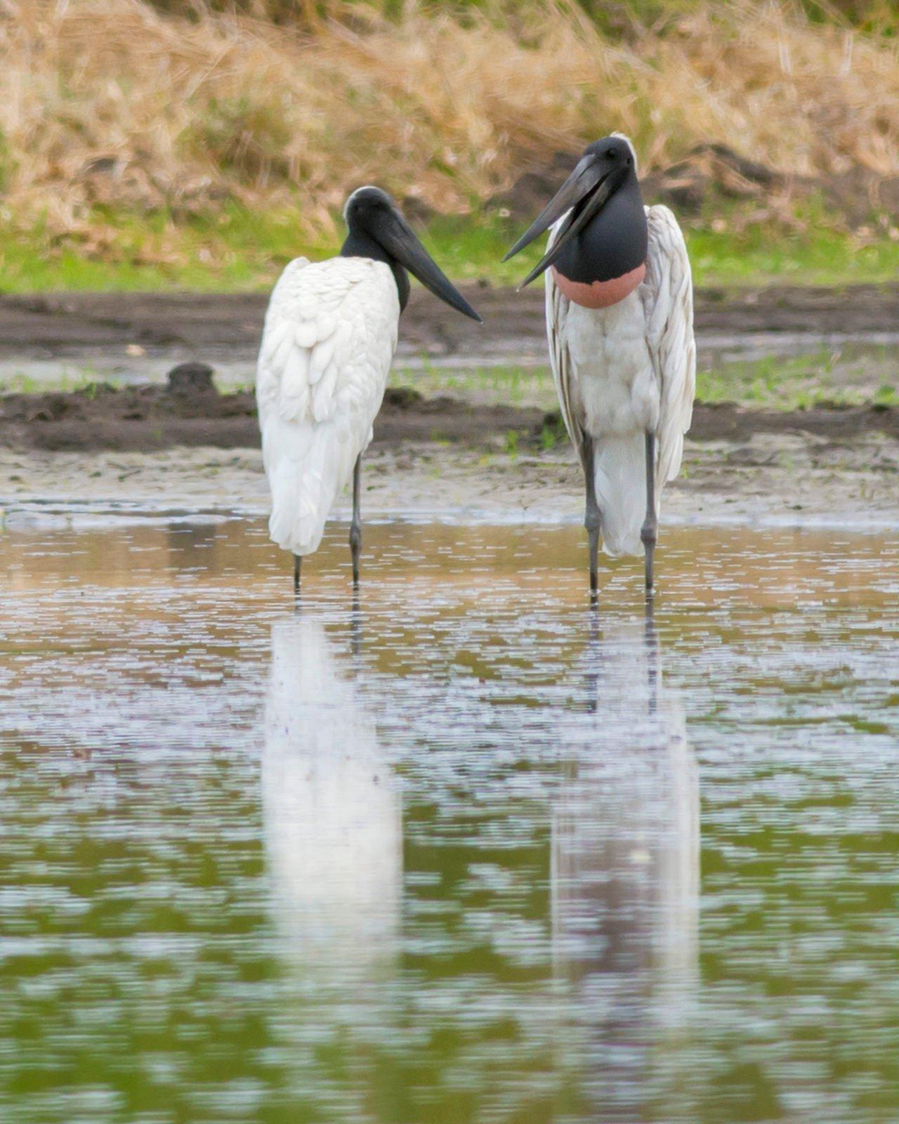 Nicoya Peninsula national parks