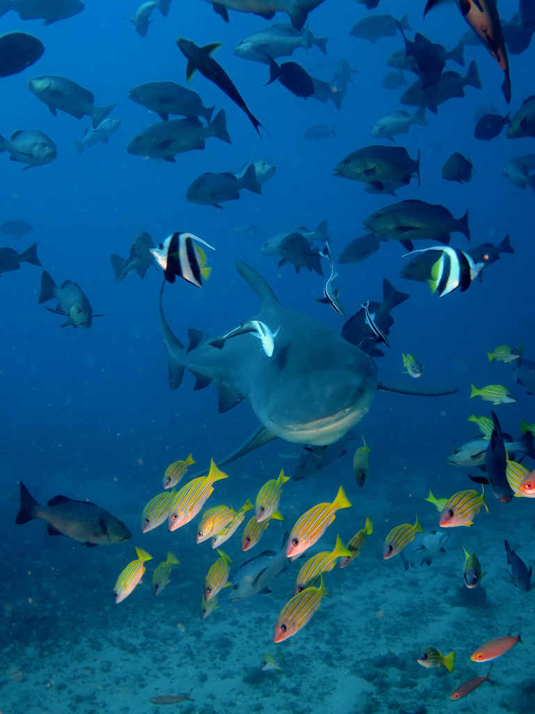 Diving the Nicoya Peninsula