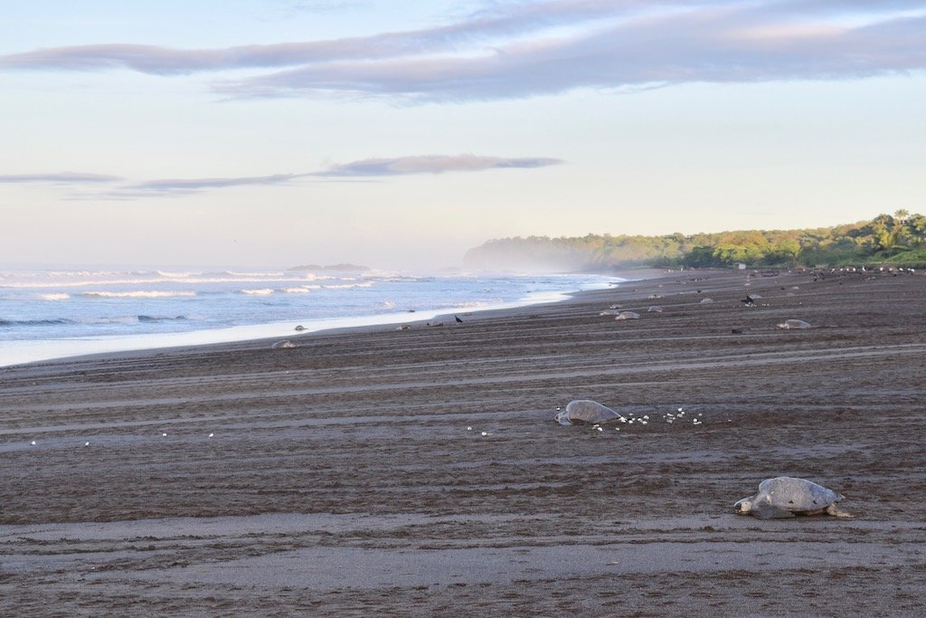 Beaches on the Nicoya Peninsula