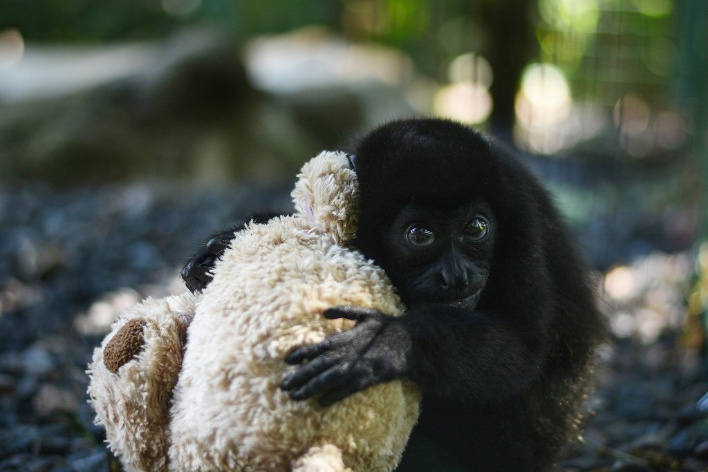 volunteer with monkeys in Costa Rica