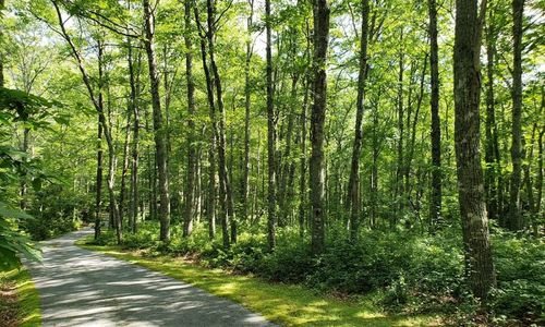 Lot-17-Twin-Creeks-Trail-Glenville-NC-04