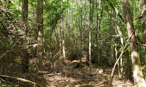 Lot-18-Branchwater-Trail-Glenville-NC-04