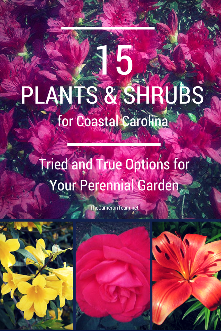 15 Plants And Shrubs For Coastal Carolina The Cameron Team