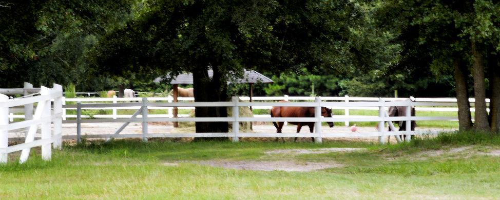 Leland NC Horses