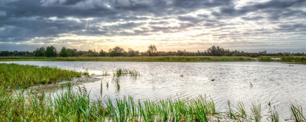 Marsh Front