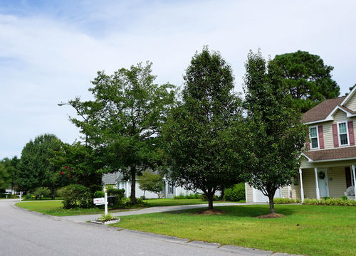 Willowbrook