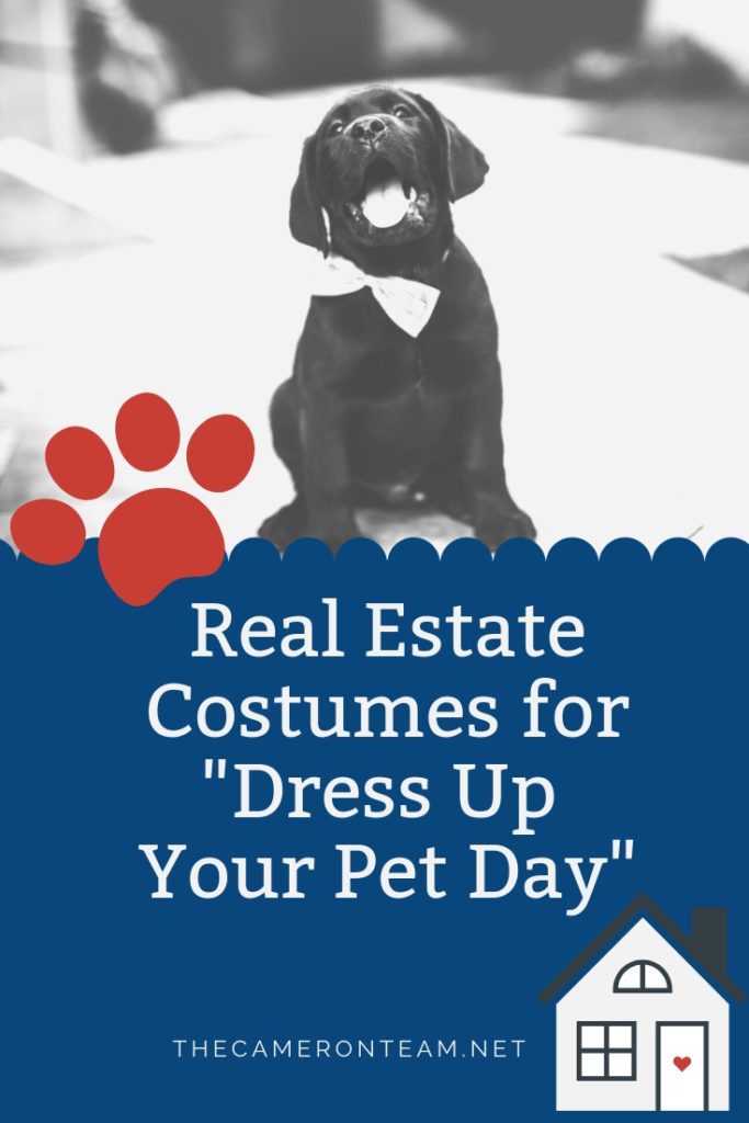 Real Estate Pet Costumes for Dress Up Your Pet Day