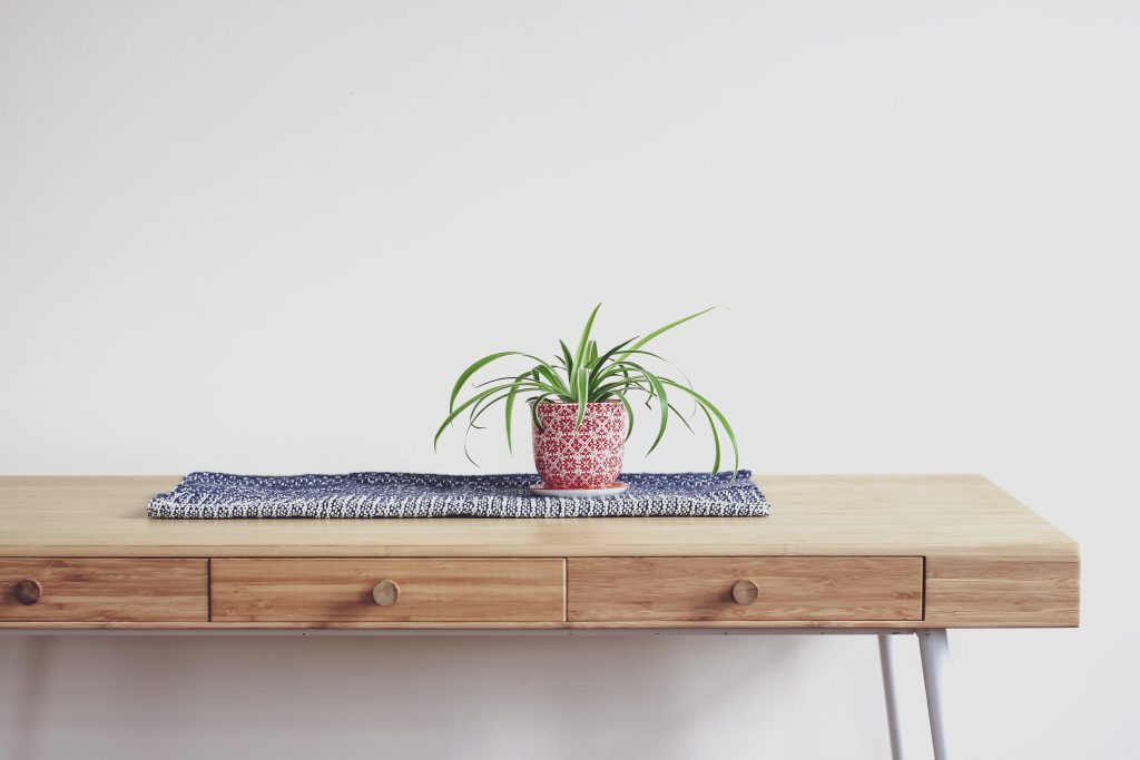 Spider Plant - Photo by Abel Y Costa on Unsplash
