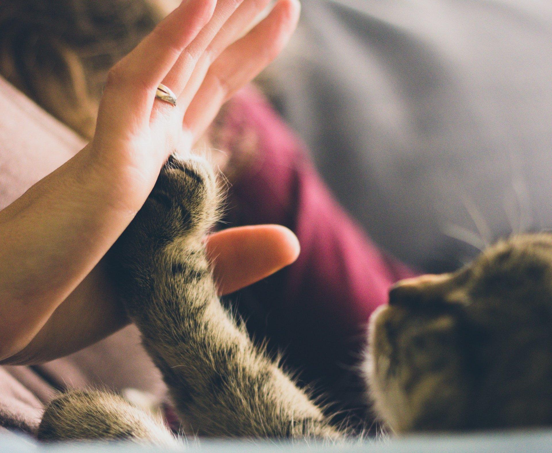Cat High Five via Pexels
