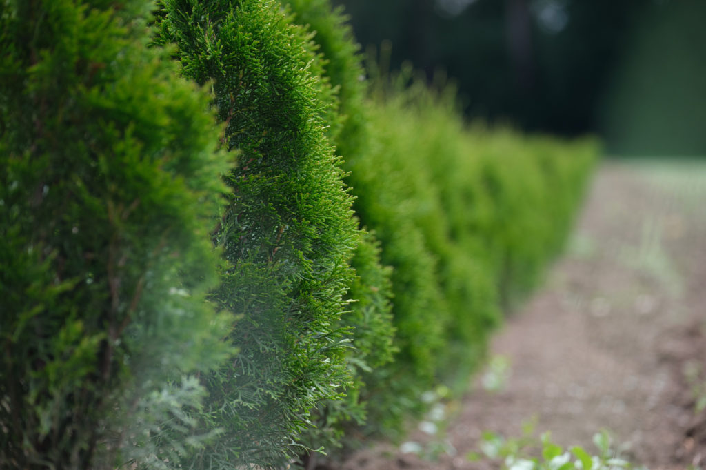 Hedge Photo by Manuel T on Unsplash