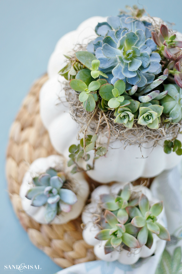 DIY Succulent Pumpkin Centerpiece - Sand and Sisal