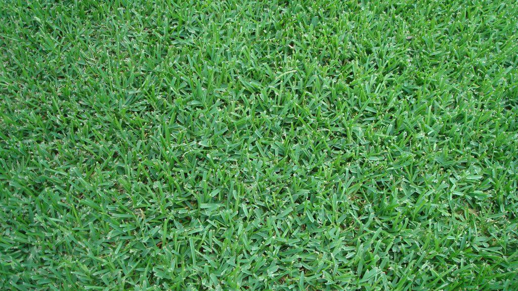 Grass - LawnStarter