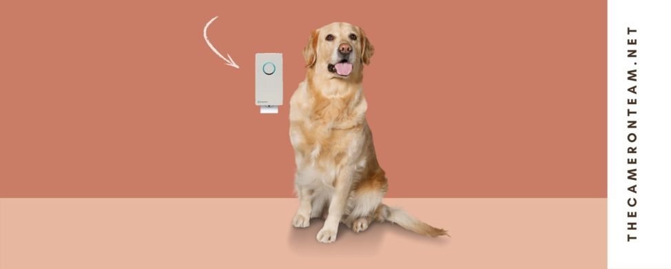 Have a Pet Odor Problem Try This Electronic Sanitizer