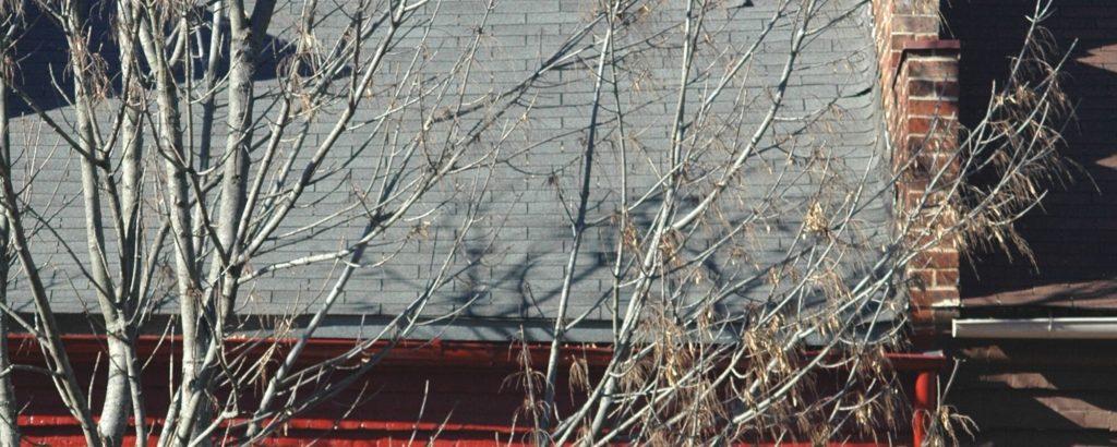 Bare Tree Outside Home