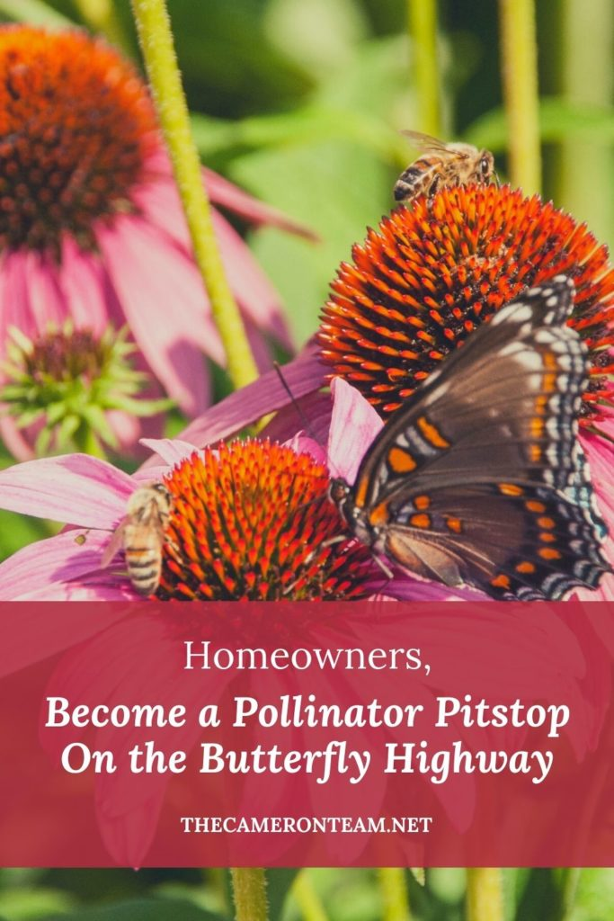 """Bees and a butterfly on a pink coneflower with """"Homeowners, Become a Pollinator Pitstop On the Butterfly Highway"""" typed on top"""