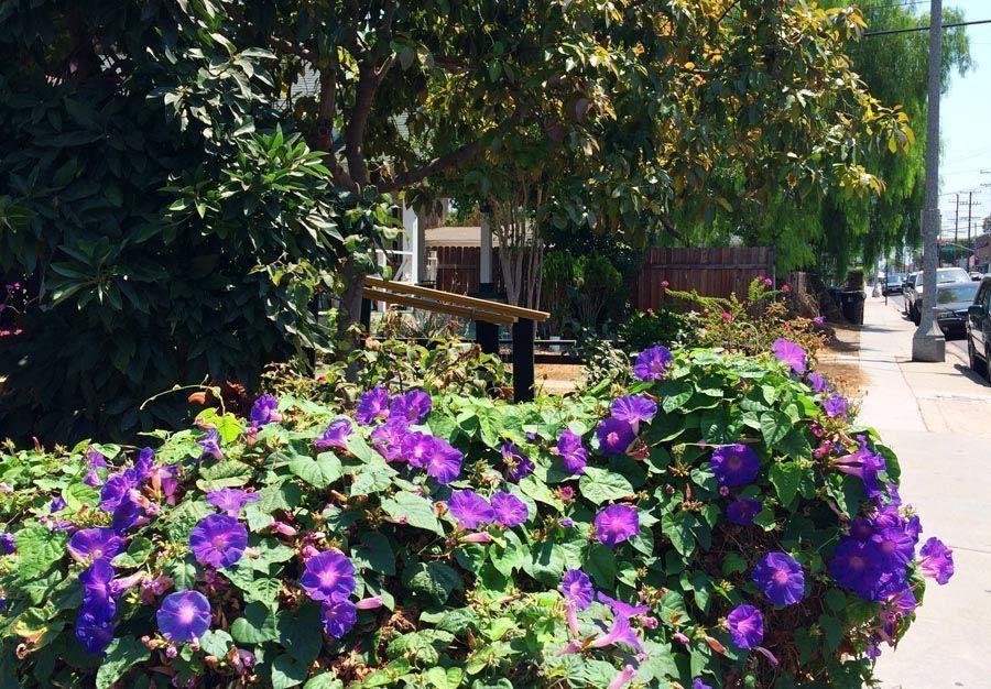 heat tolerant garden