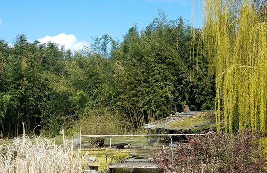 Pillings Pond