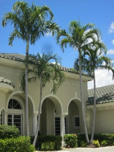 Finally Alexander palms are seen in front of a stucco house in a beige color.