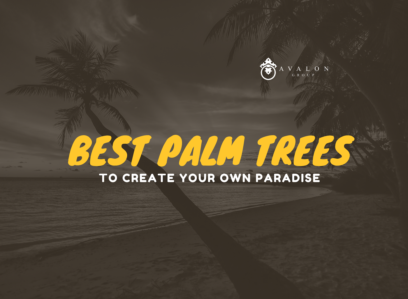 "The cover photo that states ""Best Palm Trees to create your own paradise"" Also the background shows a shadow brown image of palm trees on a beach."