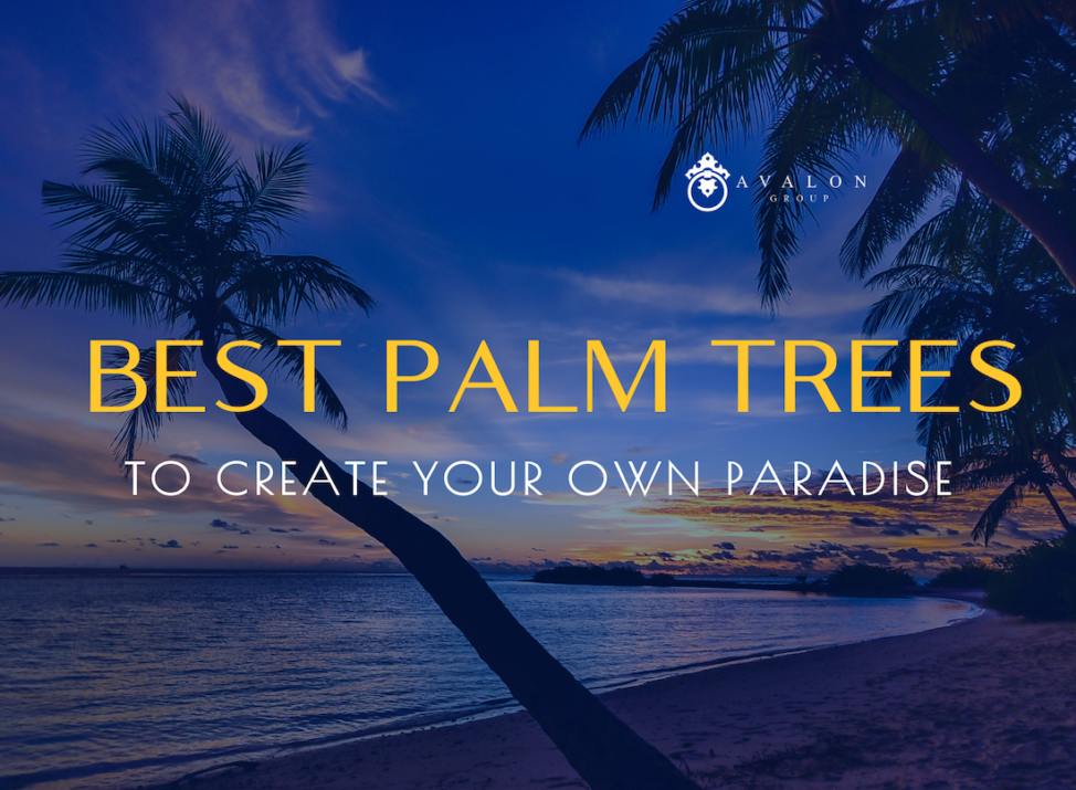"""The cover photo that states """"Best Palm Trees to create your own paradise"""" Also the background shows a shadow blue image of palm trees on a beach."""