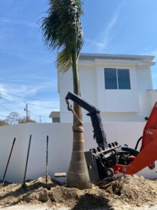 Therefore, Installing a Royal Palm at Pam's New Mid-Century Modern Home built by Kasper Modern. Additionally the house is white and the bobcat holding the tree is orange.