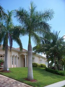 Two large Royal Palms Live the driveway.