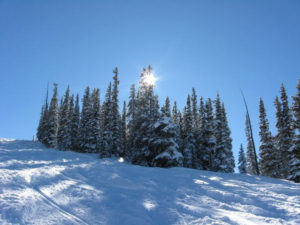 A snowy slope with evergreens near the top and the sun shining through the branches